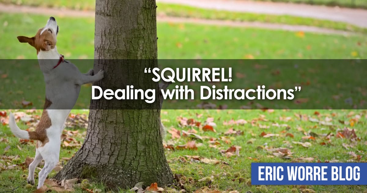 Squirrel Dealing with Distractions